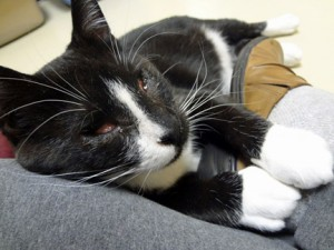 Miss Electra Finds Human Makes Good Bed - At Shelter
