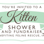 Kitten Shower 2015