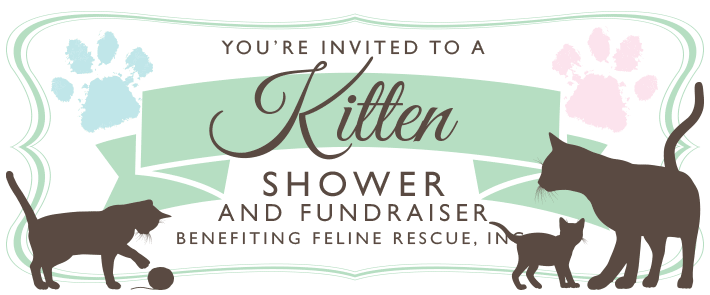 Kitten Shower 2014
