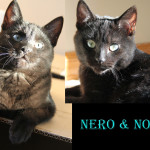 Nero and Nova Adopted