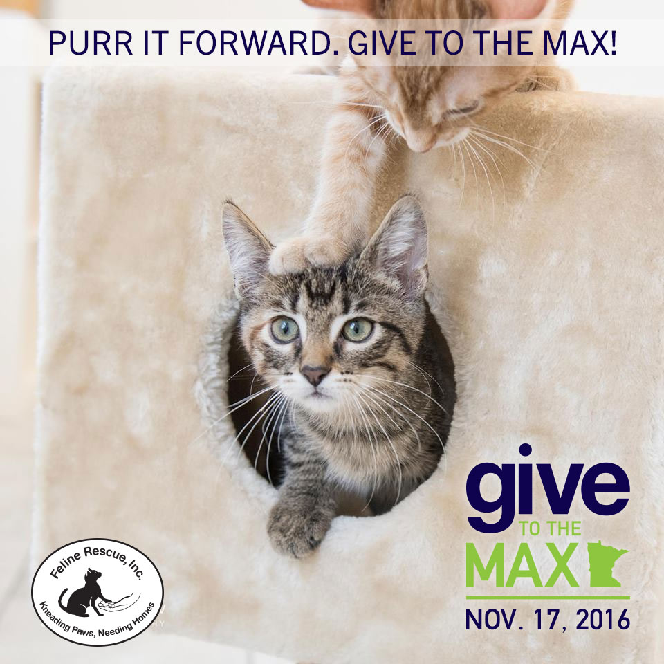 Purr It Forward Give To The Max Day