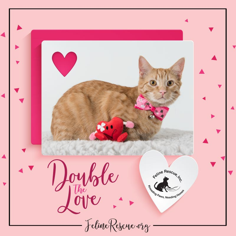 Double the Love 2017