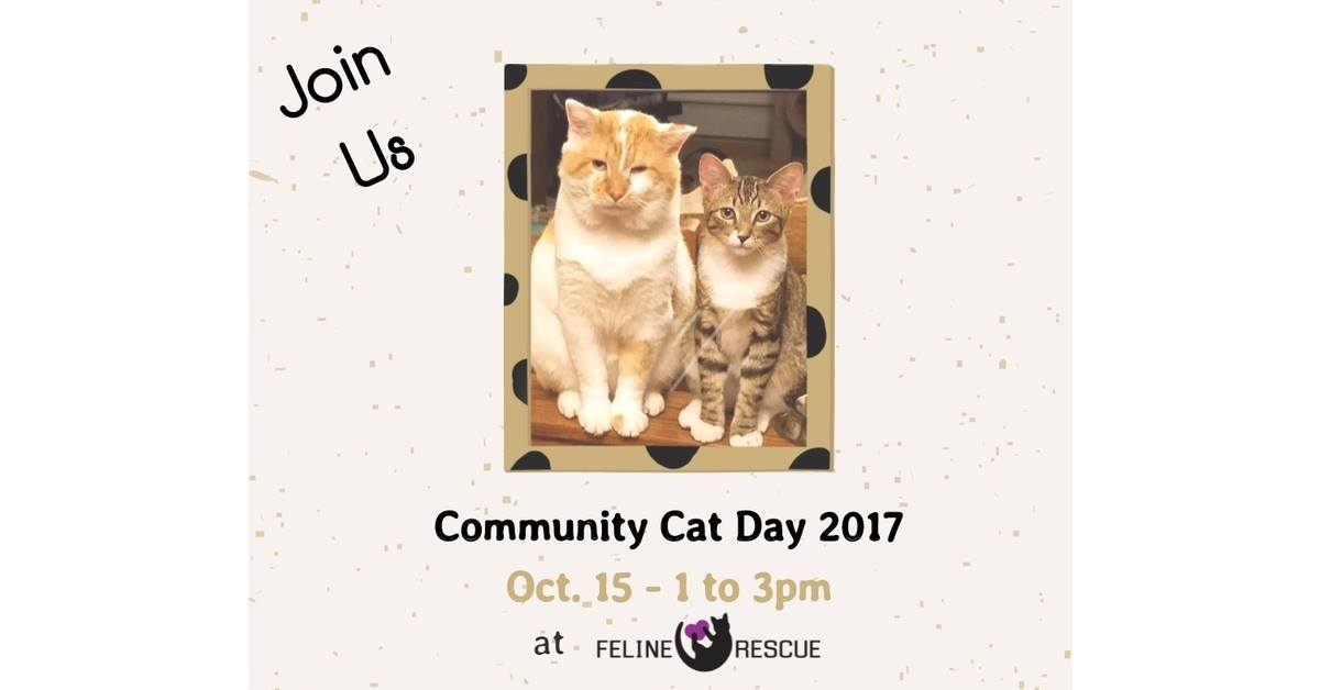 Community Cat Day 2017