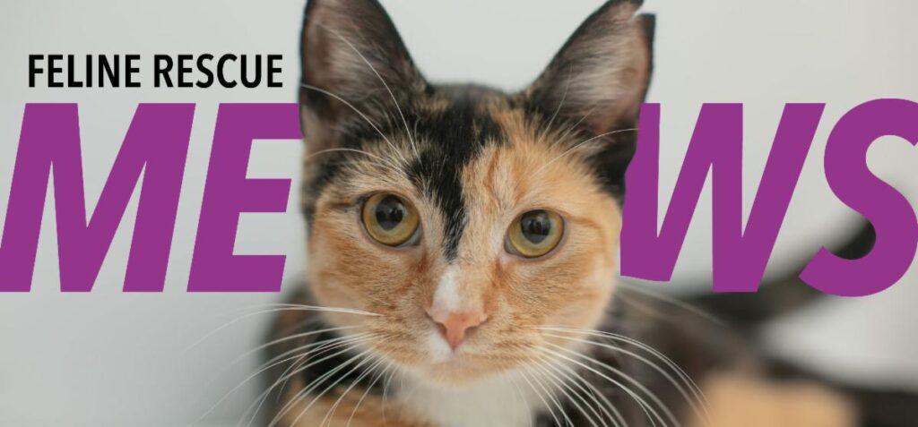 Feline Rescue Mews - May 2020